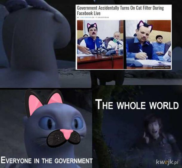 Rząd i koci filtr