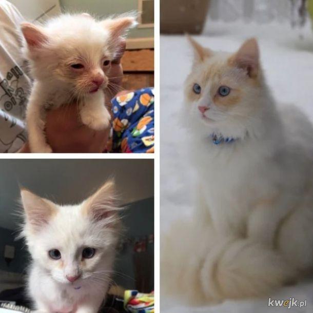Zdjęcia zwierząt przed adopcją i po