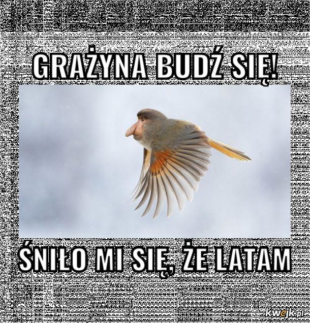 Sen Janusza
