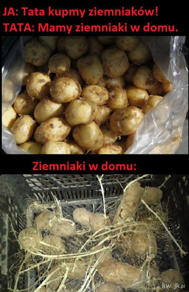Ziemniaki w domu
