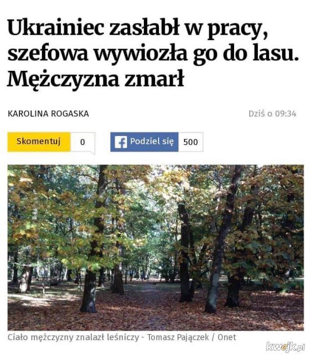 W Polsce jak w lesie