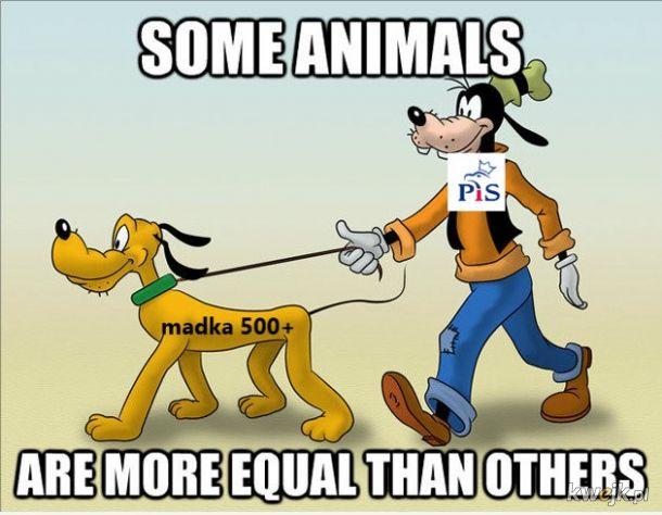 zwierzęta 500+