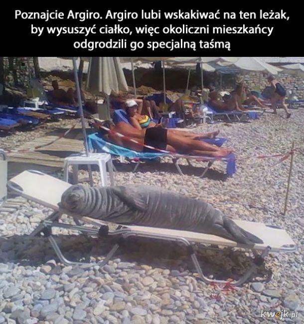 Dziwne sytuacje na plażach