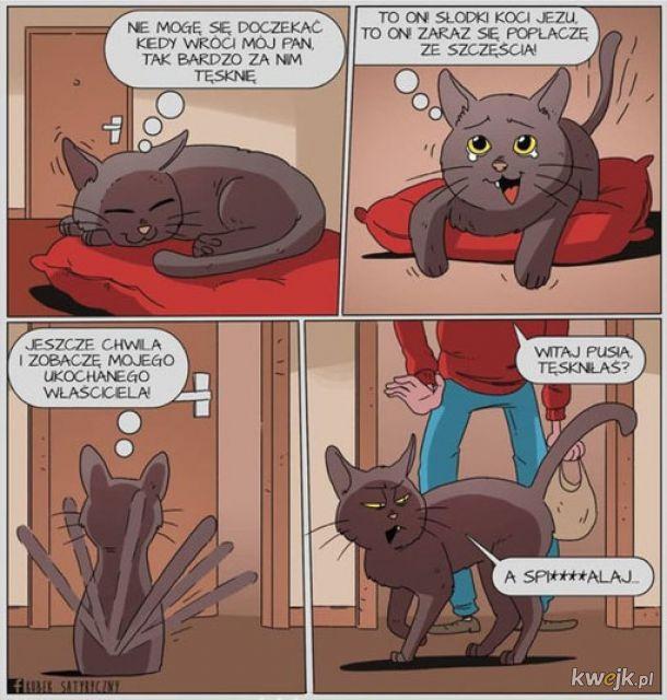 Koty już takie są