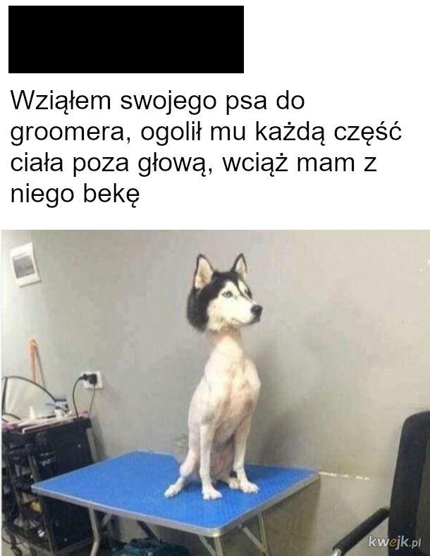 fryzjer dla zwierząt