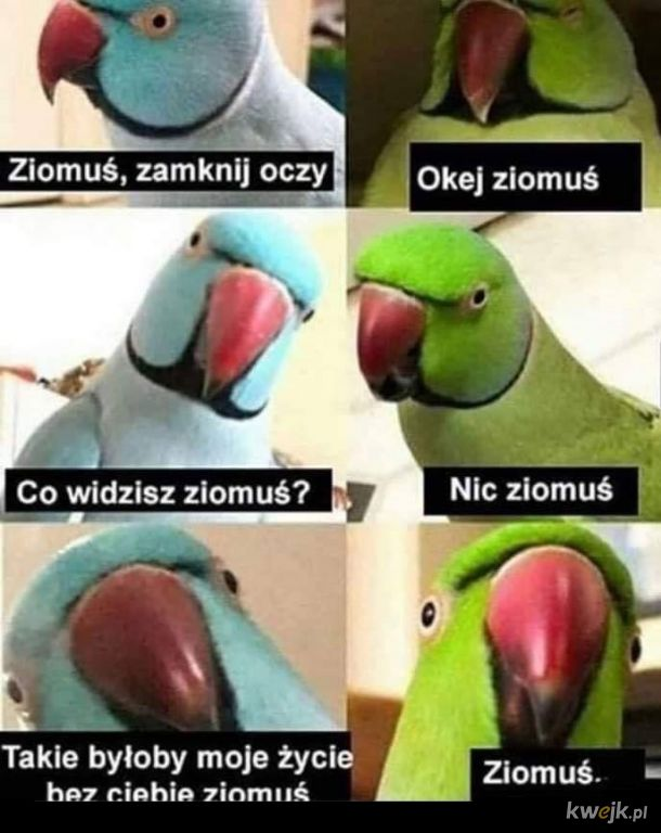 Ziomuś
