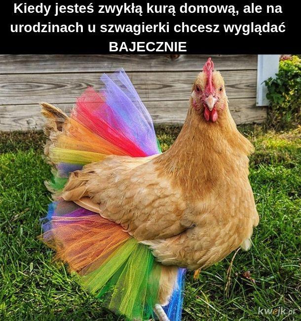 Bajeczna kura