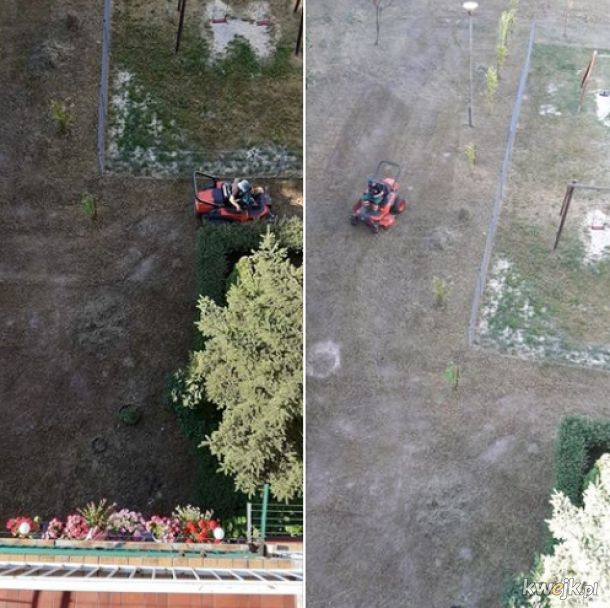 Tymczasem w Kielcach trwa koszenie gołej ziemi