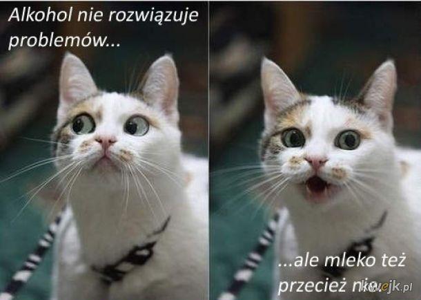 Ten kot ma rację