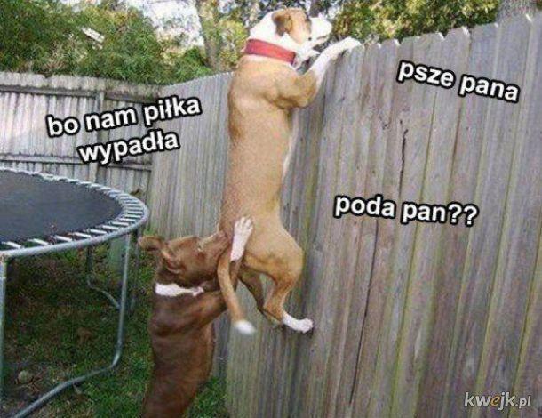 Psze pana