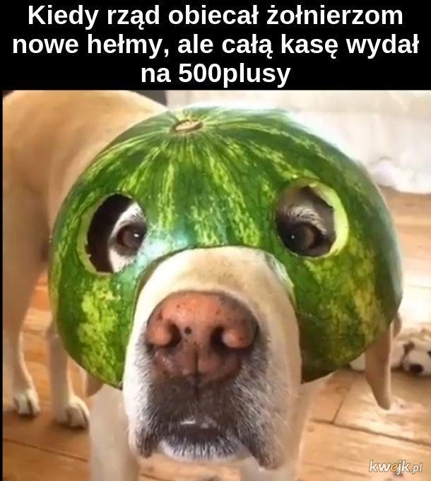 Czy w Polsce rosną arbuzy?