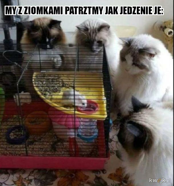 Ziomeczki koteczki