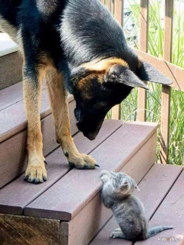 Odważny ten pies