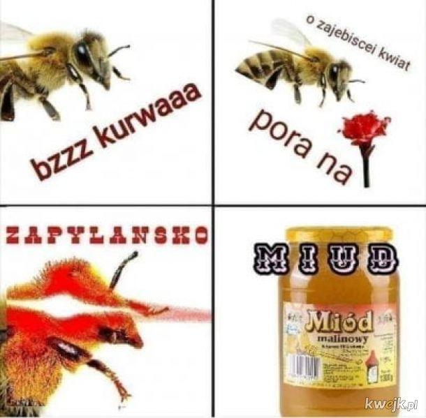 Typowa pszczoła