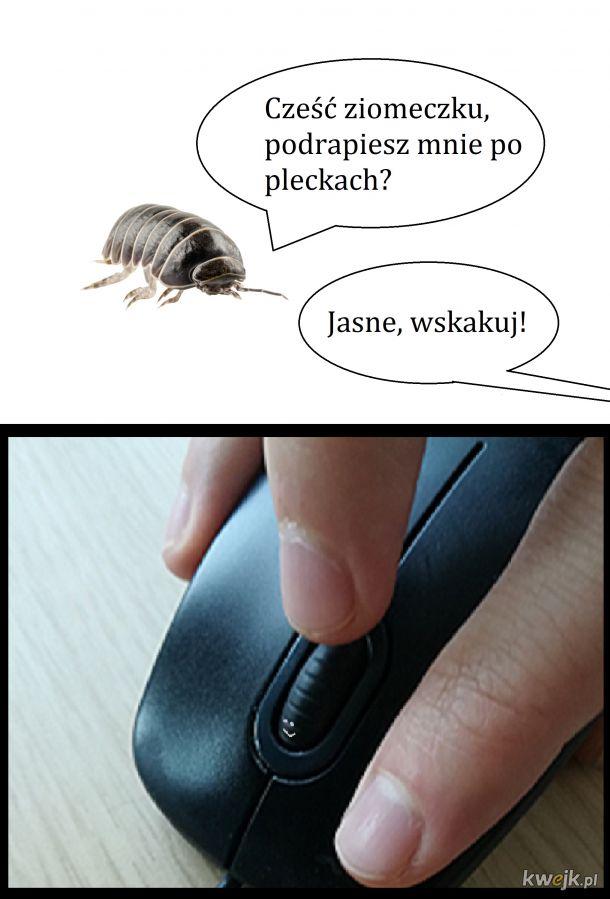 no hejka