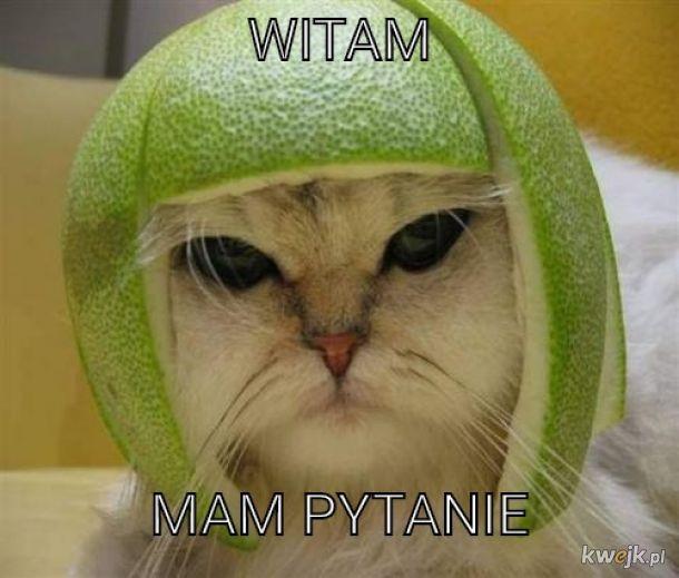 Kot z ogurkiem na głowie