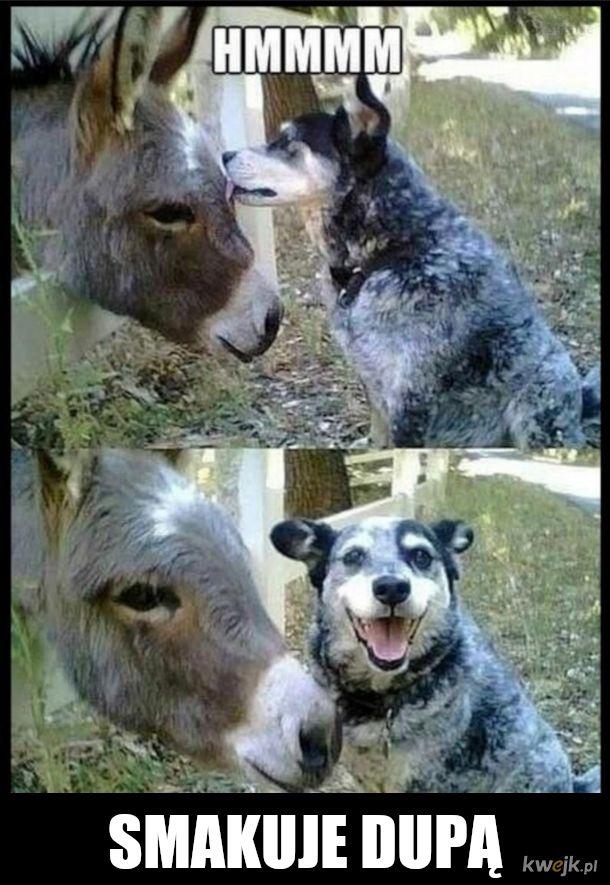Pan osiołek i pan pies