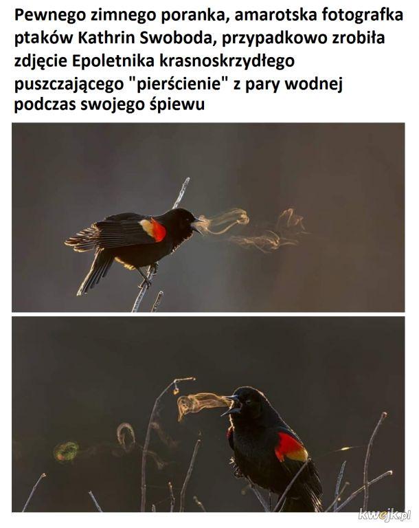 Ptak puszczający pierścienie