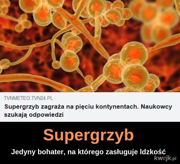 Supergrzyb
