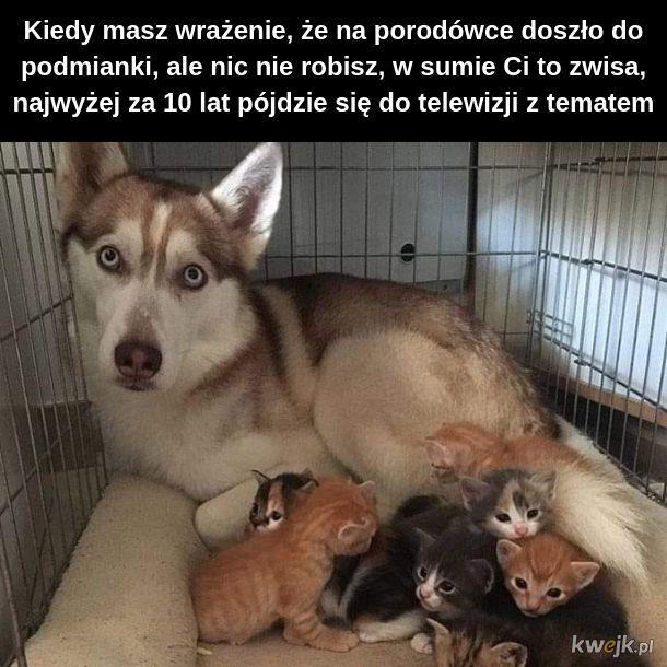 Porodówka