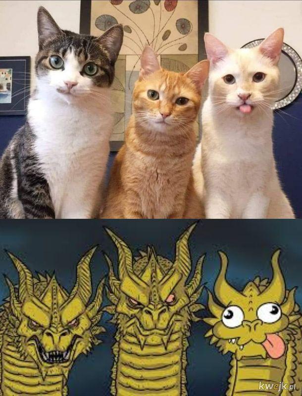 Dowód na to, że koty to smoki
