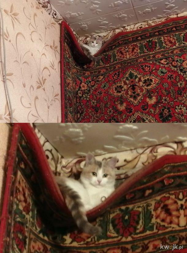 Kocie gniazdo