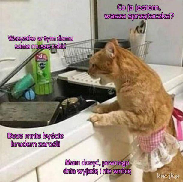 Zapracowany kot