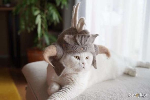 Koteczki w czapkach z kociej sierści