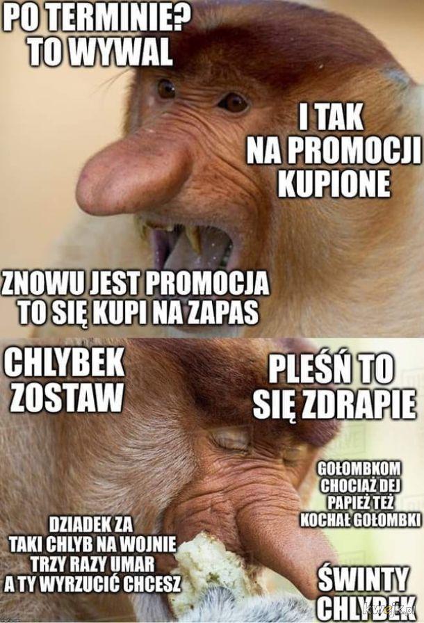 Nosaczowe memy