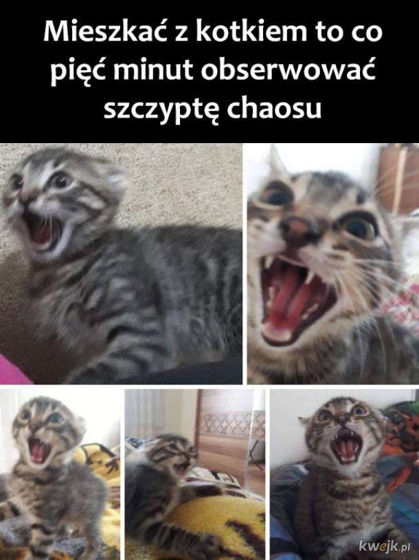 Mieszkanie z kotkiem