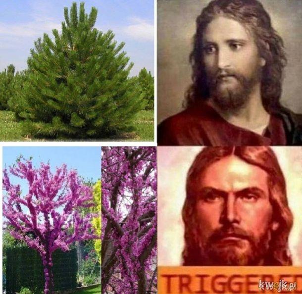 Co za drzewo?