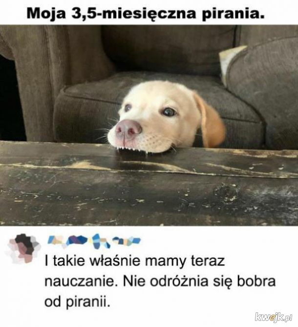 Pirania