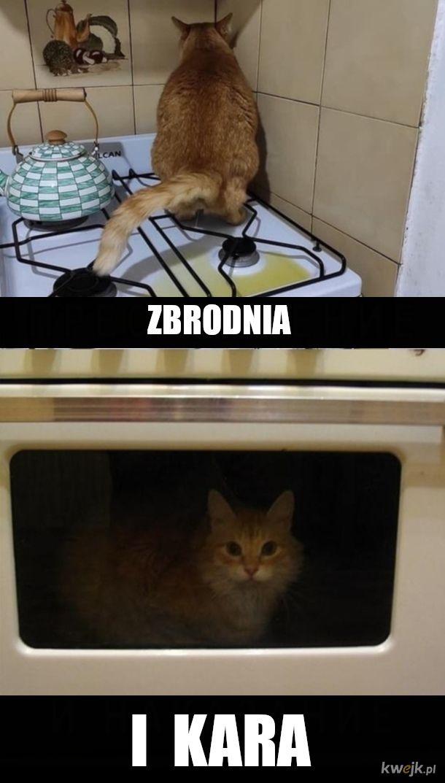 Niedobry kot napaskudził w kuchni