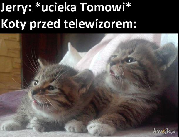 Tom i Jerry vs rzeczywistość