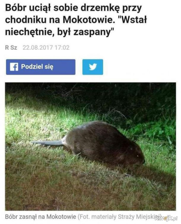 Bobry nie mają gdzie spać