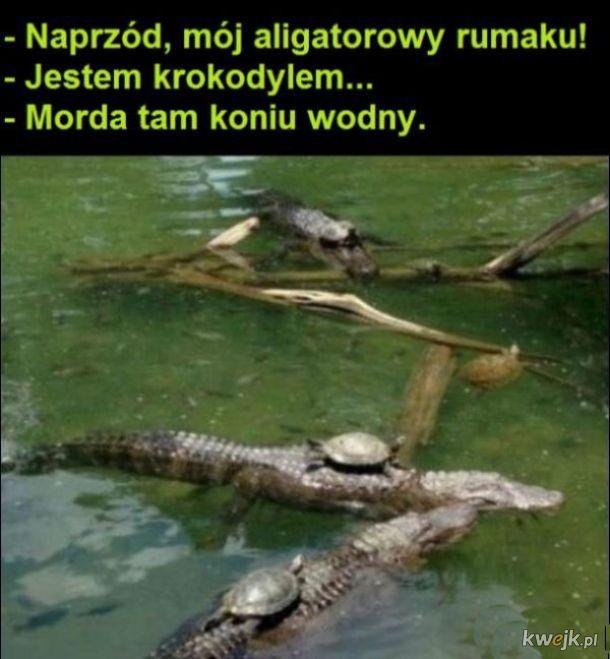Typowe żółwie