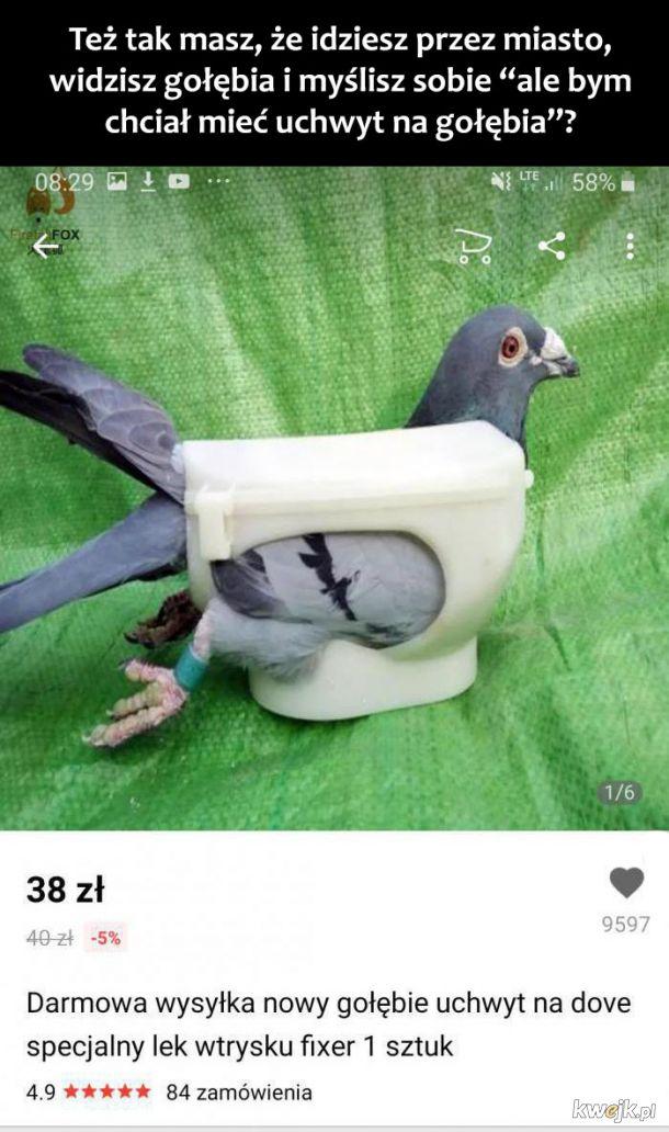Uchwyt na gołębia