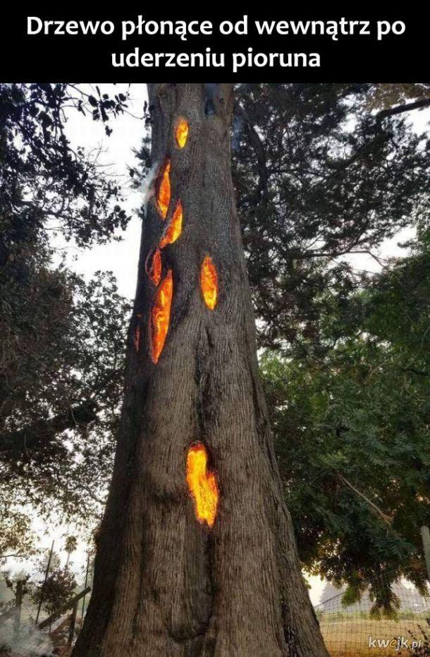 Płonące drzewo