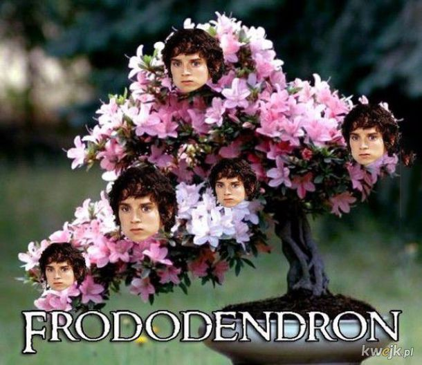 Frododendron