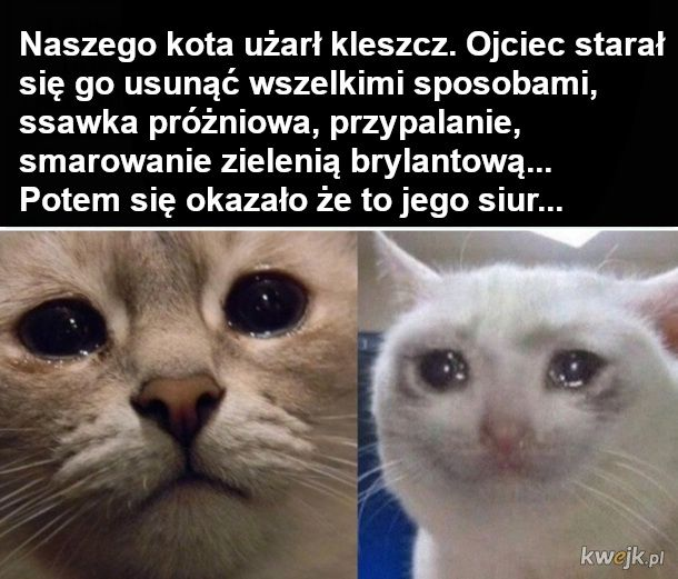 Smutny koteł