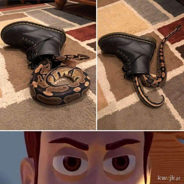 w moim bucie jest wąż