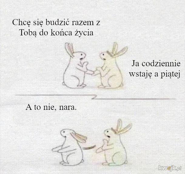Romantyk królik