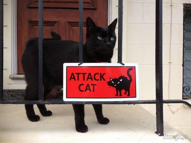 Groźny kot