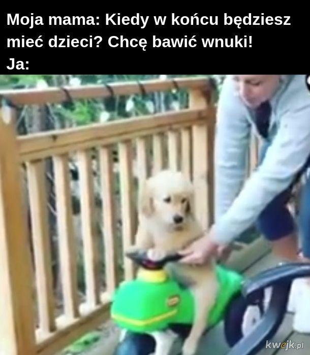 Kiedy Twój pies miał lepsze dzieciństwo niż Ty miałeś