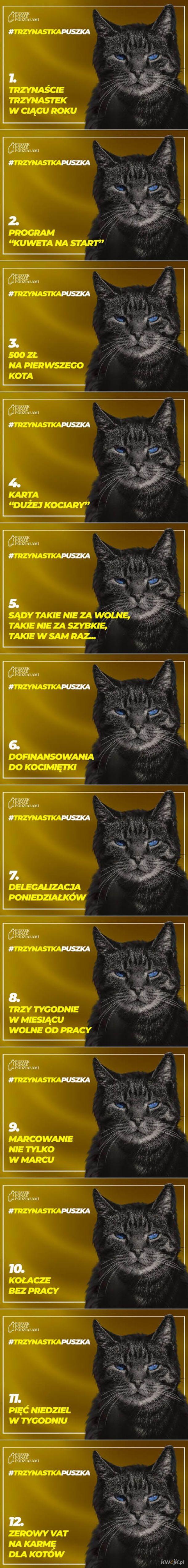 Głosujcie na Puszka - kandydata wszystkich kociar
