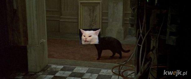 Czy te koty różnią się umaszczeniem?