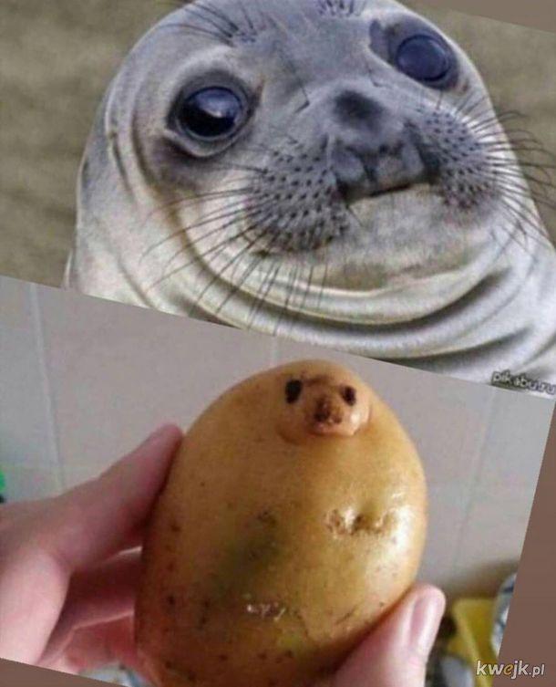 Objawienie w ziemniaku