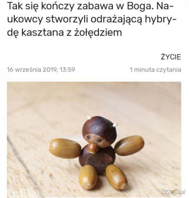Hybryda