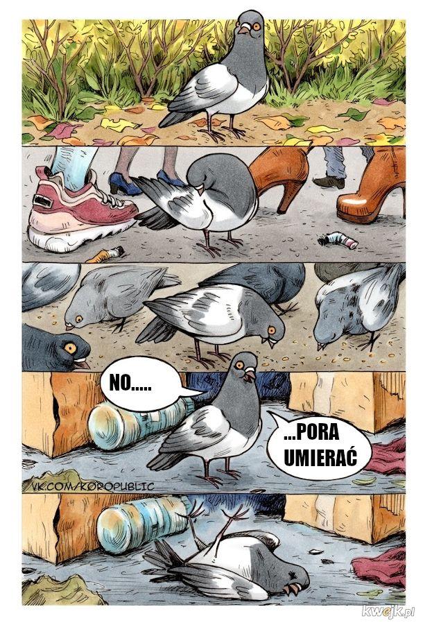 Egzystencjalna historia pana gołębia