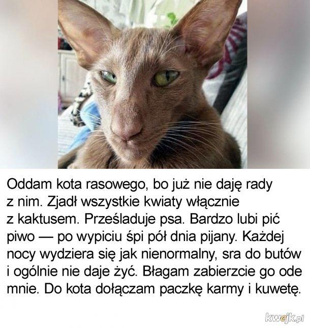 Uciążliwy koteł